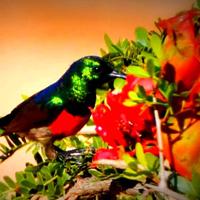 21 Day FGASA Birding Specialist Course